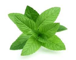 mint leaves to lighten dark lips