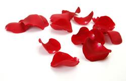 rose petals to lighten dark lips
